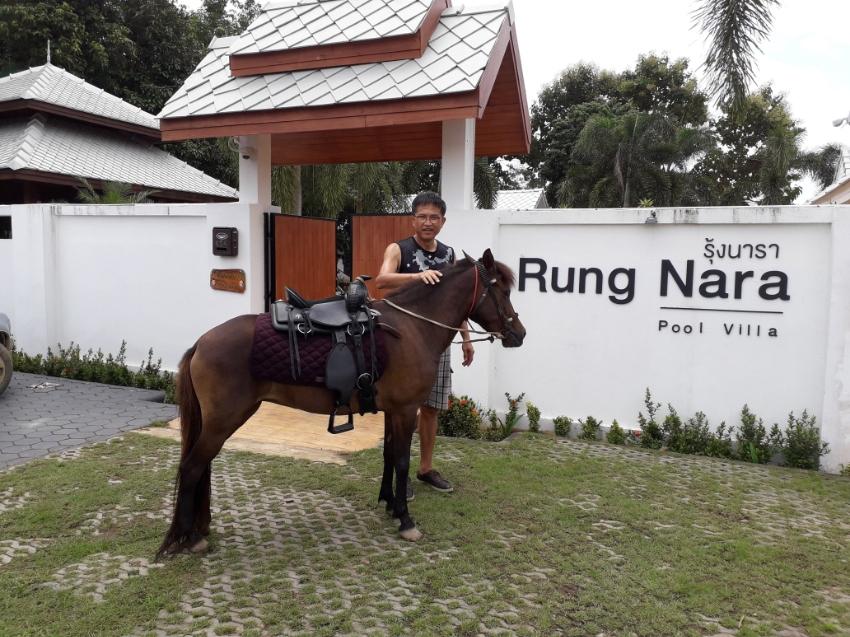 Free horse riding club