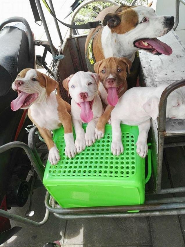 Pattaya Dog Rescue / Pattaya Animal Shelter - Need dog food donation