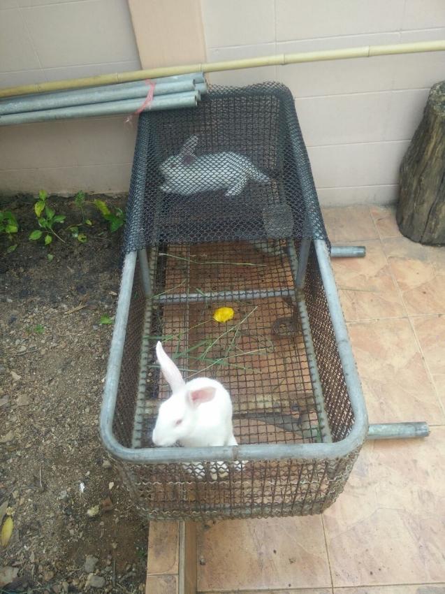 Rabbit couple for sale !