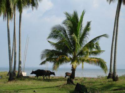 Beachfront land for sale Ko Sukorn - Trang