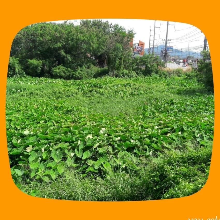 Chonburi land, Na Pa Sub-district, bypass, Chonburi 2 Rai
