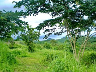 LAND with BUNGALOW FOR SALE with DEED  6 RAI 1 NGAN 43 TARANGWA