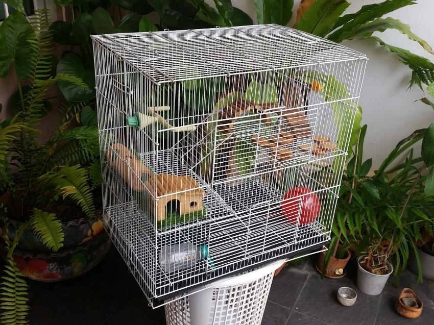 Folding Cage