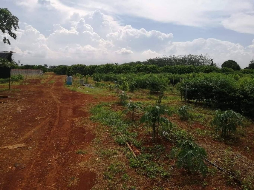 Land for sale at Nakornratchasrima, PakChong, close to highway.