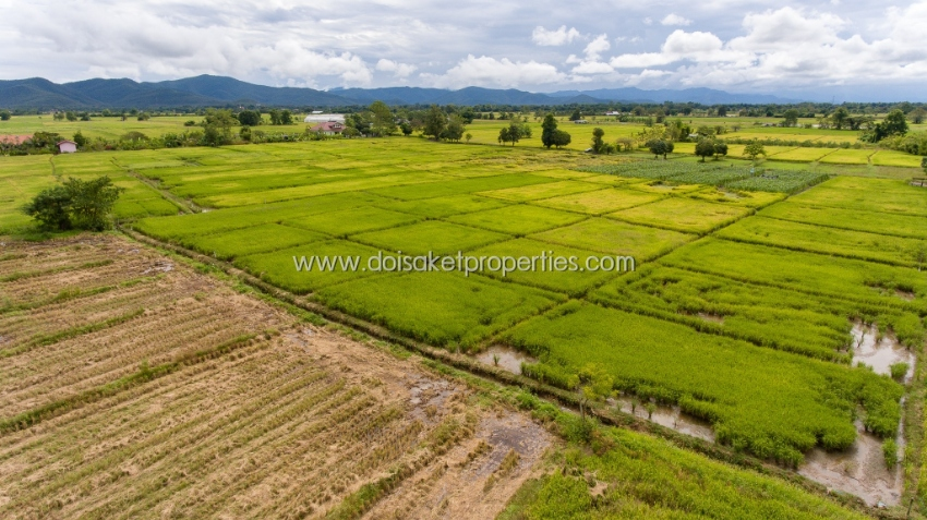 (LS299-05) Large plot of Paddy fields for sale in Pa Pong, Doi Saket.