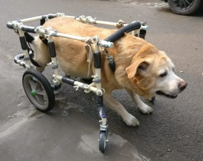 Treadmill for Handicapped Dogs - Please give or sell cheap a treadmill