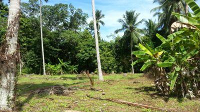 For Sale Land Koh Samui Lipa Noi 7 Rai