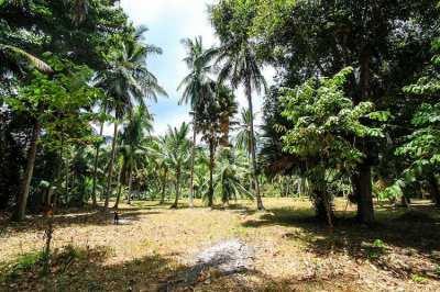 flat plot of coconut tree