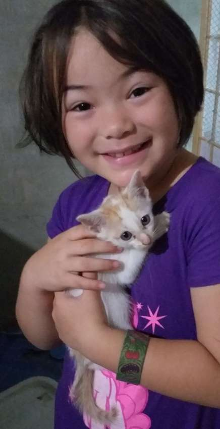 Cats and kittens FREE to good homes