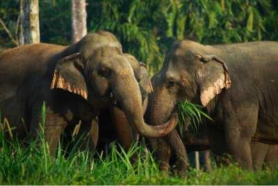 Khao Sok Lake Elephant Experience-Khao Sok Tour Operators