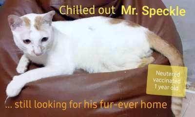 Beautiful friendly male cat in need of a new home
