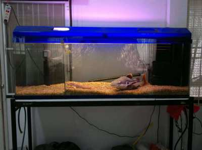 Fish Tank 60