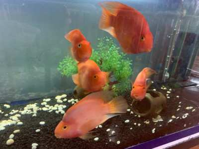 Fish tanks for sale 60x20x20