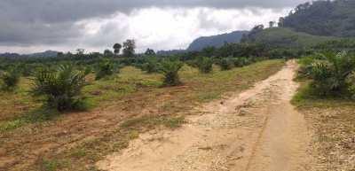 Khao Lak - 245 Rai Flat Land with Main Road Frontage - 750,000 / Rai