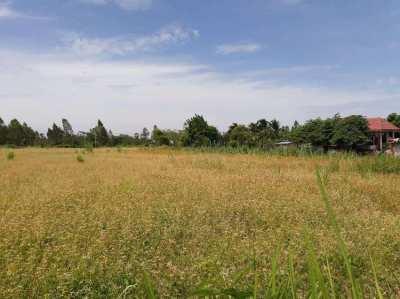 Land for sale close to Panasonic/SCG ขายที่ดินบนเนินสวยSCG,Panasonic