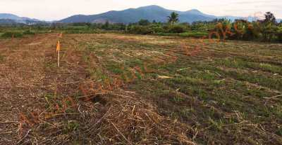 1006001 Freehold Land in Mae Taeng, Chaing Mai