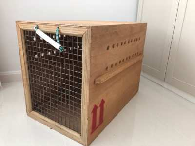 Dog box for international travel