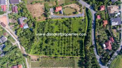 Nice Plot of Land Full of Longan Trees for Sale in Doi Saket