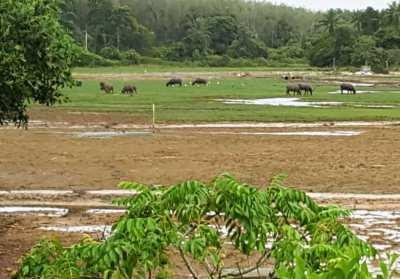 Land for sale on Koh Sukorn, Trang