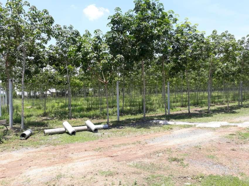 Rubber Tree Farm - Plantation 22 Rai 7 Year Trees