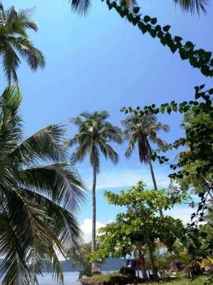 5 Rai of Land for sale at Koh Mak Noi - Phang Nga Bay.