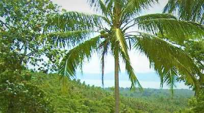 For sale sea view land Maenam Koh Samui