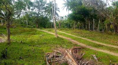 For sale sea view land in Chaweng Noi Koh Samui - 2516 m²