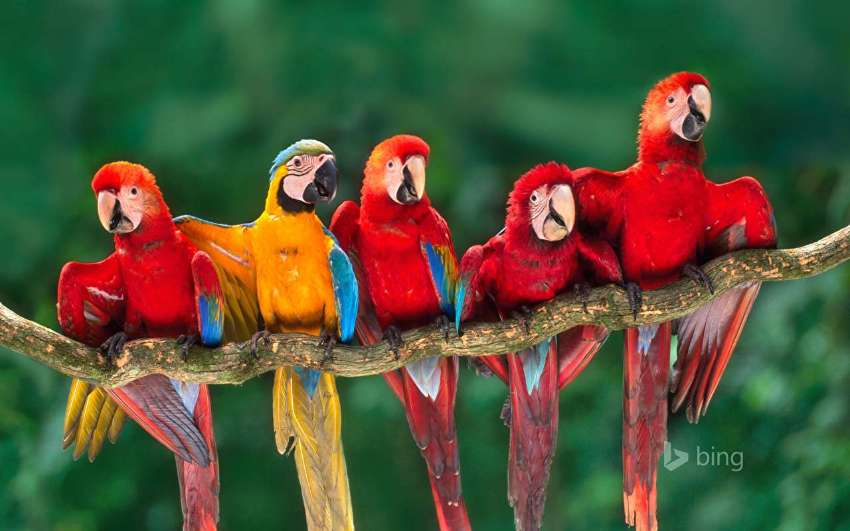 we are looking for parrots