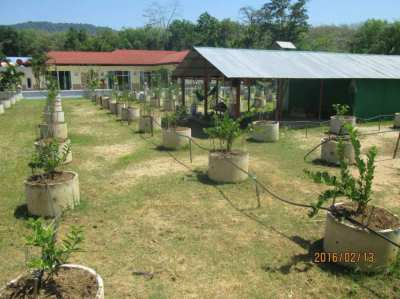 REDUCED PRICE Phuket Building land with 4 BEDROOM VILLA WITH POOL
