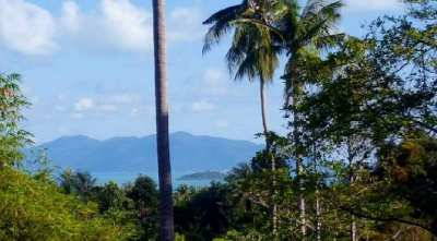 For sale sea view land in Bangrak Koh Samui - 750 sqm