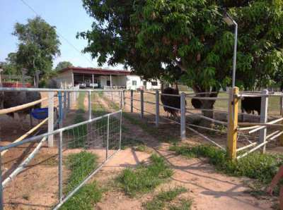 Farm for sale at Nikhom Song Khro , Udon Thani
