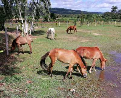 Ponies for Sale - Update