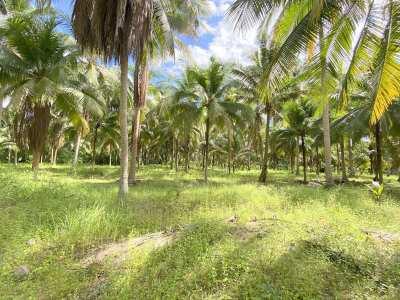 Idyllic palm-grove plot of 10.356 m2 at good Huai Yai location