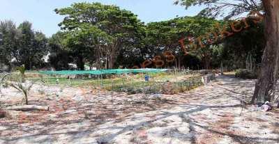 5007041 Freehold Land 7 Rai In Hua Hin