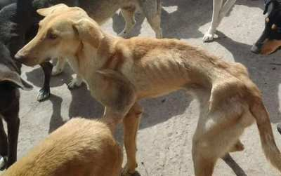 Pattaya hungry dogs ? Please help us to find them to feed them