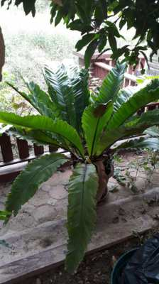 POTTED PLANTS (24) - LARGE RANGE, IDEAL FOR TERRACES