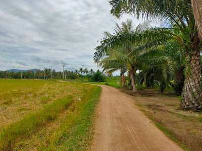 Nice 5 Rai Palm Oil Tree Plantation with Coconut Trees