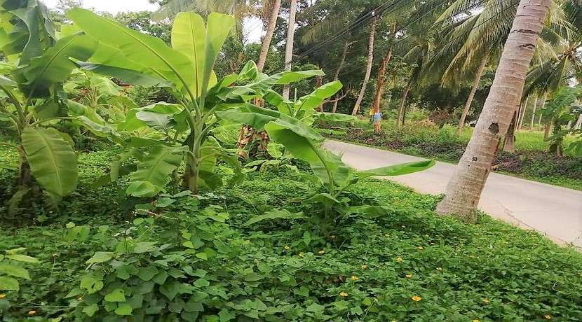 Land for sale in Lamai Koh Samui center
