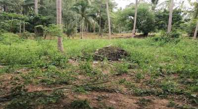 For sale land in the center of Lamai in Koh Samui 592 sqm to 692 sqm