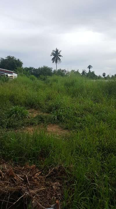100TW AFFORDABLE PLOT FOR SALE IN GOOD & QUIET AREA IN HUAY YAI