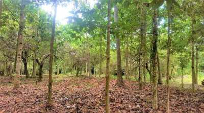 For sale flat land 3240 sqm in Maenam Koh Samui