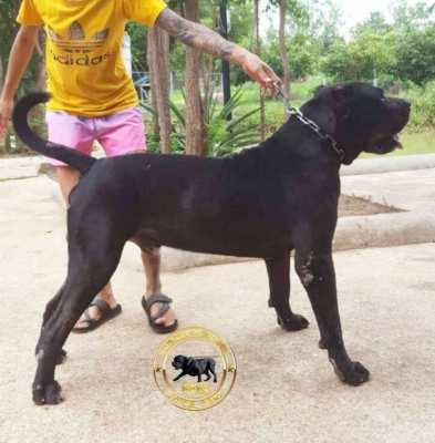 Presa Caniero Puppy