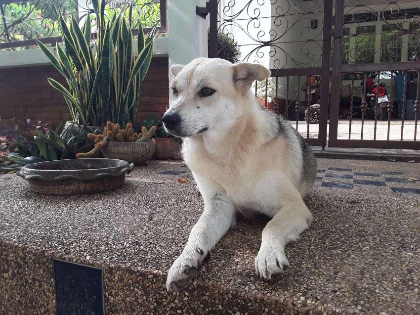 Help re home Shiba