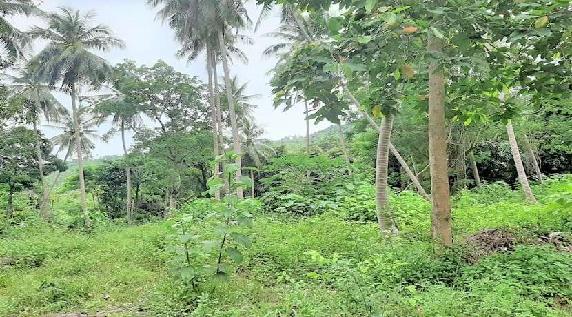 For sale 1 rai to 16 rai land in Chaweng Koh Samui