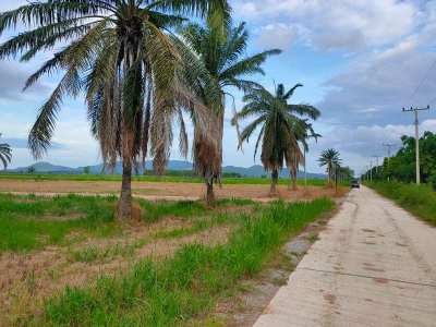 Big Land Big Bargain! 128-3-10 Rai Connecting Land Available For Sale