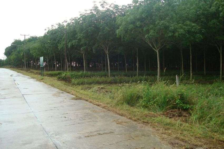 Chon Buri, 2 to 6 Rai of Prime Chanote Land with Road, Electric, Water