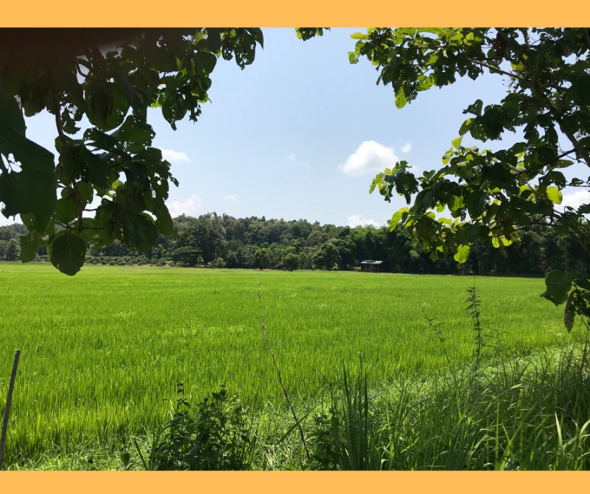 Nice Land For Sale in Chiang Rai
