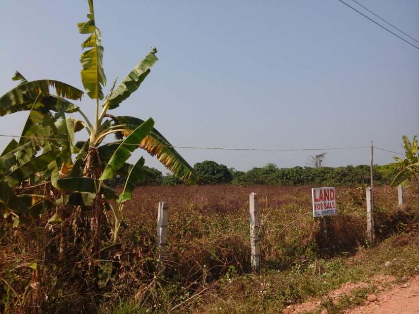 Land For Sale In Doi Lo, Chiang Mai