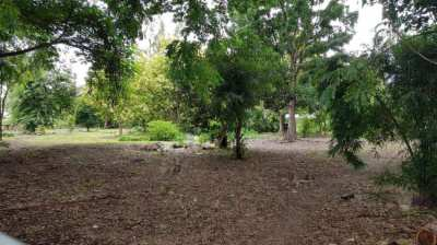 FOR SALE : Filled Garden Land with Mature Trees (672 Talang Wah)
