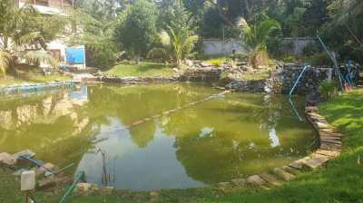 #3153  SPACIOUS CHARACTER VILLA IN A MATURE 2 RAI PLOT WITH LARGE POND